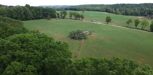 Fans of the Shawshank Redemption were distraught when images of the tree, which features at the end of the film, showed it flattened in the middle of an Ohio field.