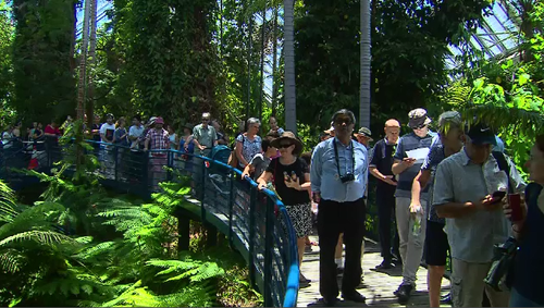 Crowds are flocking to Adelaide Botanic Gardens to catch a glimpse of the rare Indonesian 'Corpse Flower.'