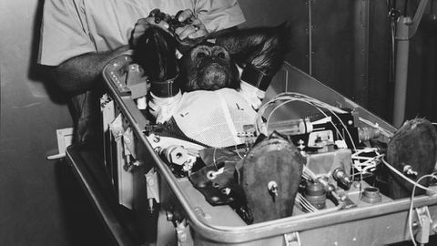 Enos the chimp (NASA)