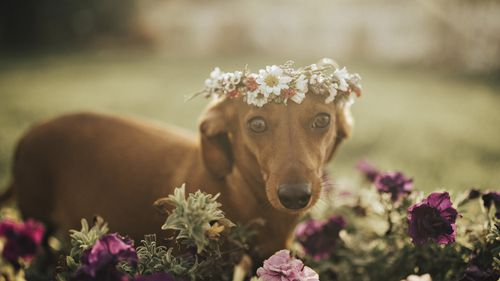 Decked out in a flower crown, Cindi wasn't shy of showing off her puppy fat. (Supplied)