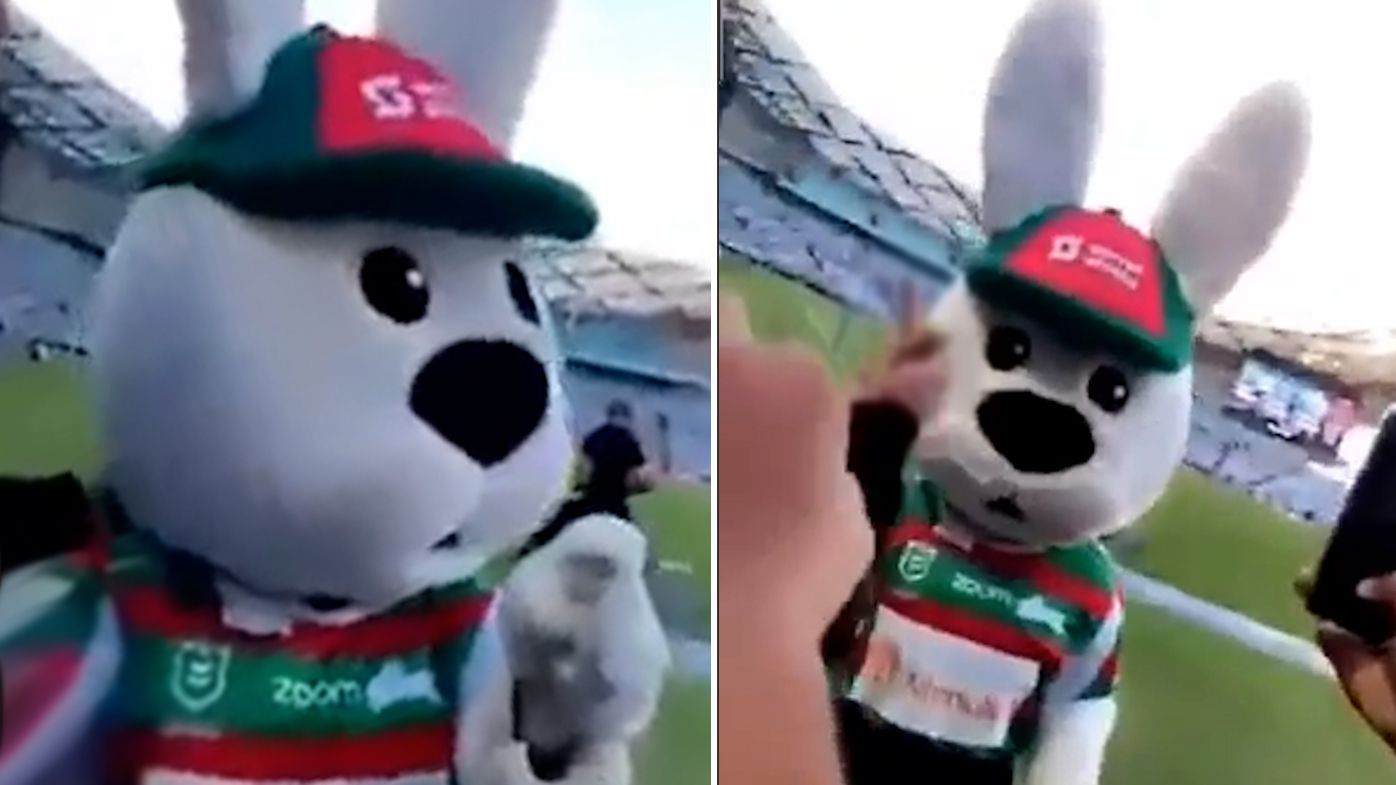 NRL investigating after South Sydney mascot Reggie the Rabbit roughed up by fans