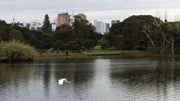 Sydney's Centennial Park to close to cars this weekend