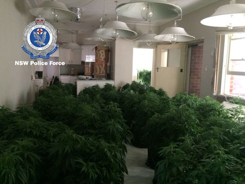 The plants have an estimated street value of $6.2 million. Picture: NSW Police
