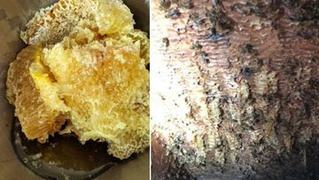 Chunks of the honey beehive were removed from George's basement ceiling.
