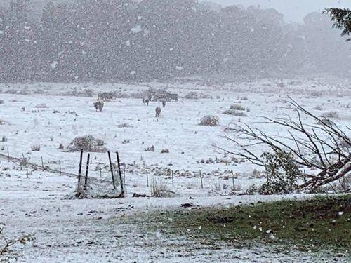 190529 Australia snow forecast weather Bathurst NSW news today