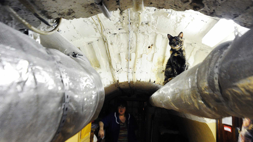 The cats live in the museum's basement.