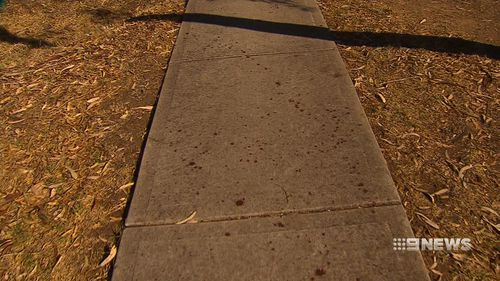 Blood spatters on the pavement in the park. (9NEWS)