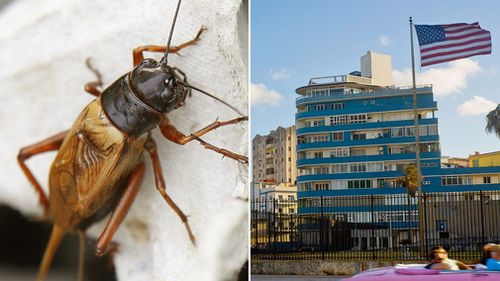 "Cuba has implied ""crickets and cicadas"" may have been responsible for a noise that sparked numerous health complaints among US embassy workers. (AAP/AP)"