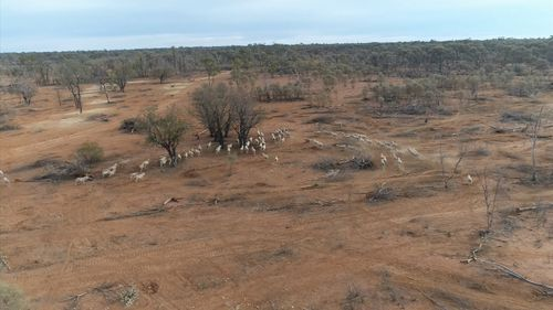 Despite the NSW Government pledging an additional $500 million in relief funding, farmers are facing starving livestock issues and battling to keep themselves afloat. Picture: 9NEWS.