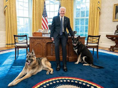 Joe Biden in the Oval Office with his dogs Champ and Major