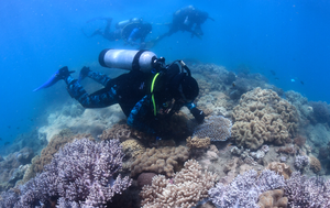 Fresh hope for the Great Barrier Reef after 'game-changing' technique is deployed on damaged coral