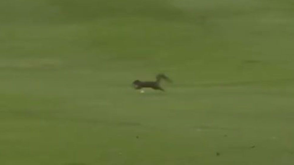 Sergio Garcia drive almost takes out squirrel