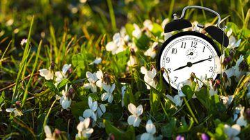 Clock in the daylight grass