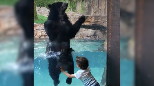 Five year old Ian and Andean bear Luka, have had a bit of fun at Nashville Zoo. Picture: Facebook