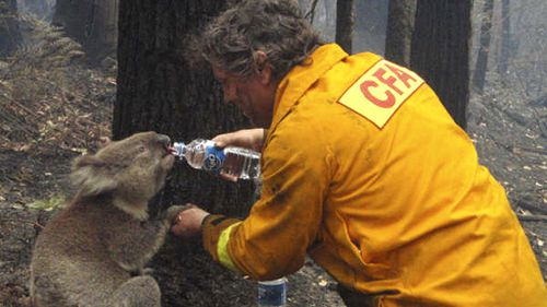 Sam the koala became a symbol of hope during the 2009 Victoria bushfires. (AAP)