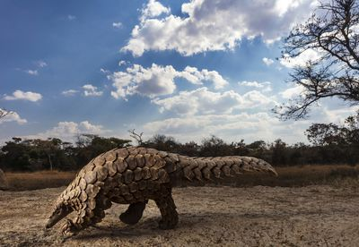 Pangolins in Crisis