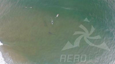 """Mr Caska said his brother """"had a heart attack"""" when he saw the photo of how close he had come to the shark."""