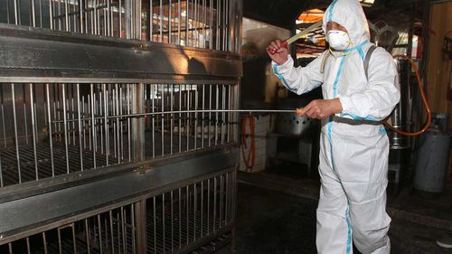 Thousands of poultry culled as bird flu fears grow in Taiwan