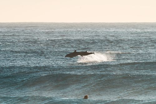 People stopped in their tracks and lined the coastline to watch the creatures.