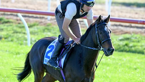 Max Dynamite is Cam Williams's top pick for the Cup winner. (Image: AAP)