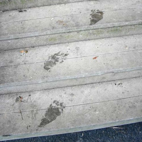 Rose's footprints in front of the house when she returned. (Facebook)