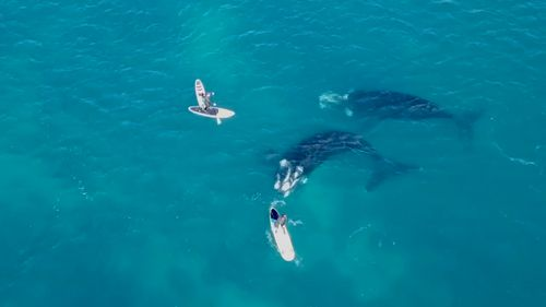 The whales circled the father and son.