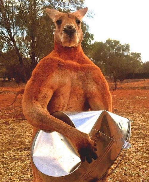 This picture went viral in 2015. (The Kangaroo Sanctuary/ Facebook)
