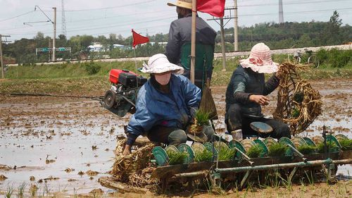 North Korea's notoriously undeveloped agriculture sector leaves the country struggling to feed itself.