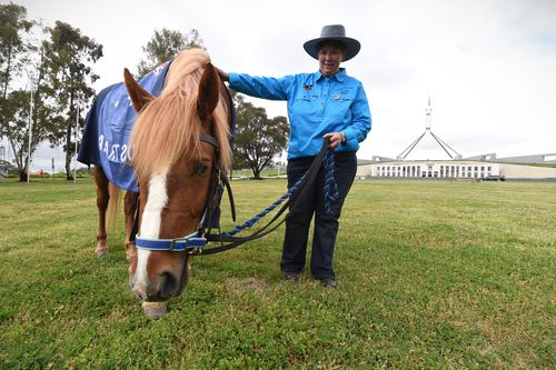 A brumby grazes on grass outside Canberra in a 2016 protest. Peter Cochran has been lobbying against a brumby cull. Picture: AAP