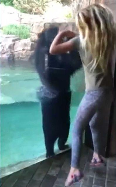Bear mimics little girl jumping at Nashville Zoo