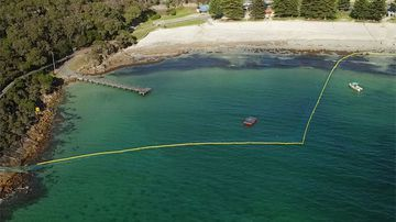 Divers have inspected the 320 metre length of barrier, which drops in places to a depth of six metres, and fences off a large swimming area the size of two football fields.