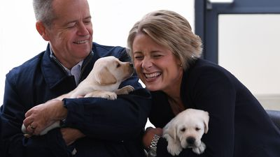 Bill Shorten and Kristina Keneally play with Labrador puppies Bill and Beau during a visit to Guide Dogs Victoria.
