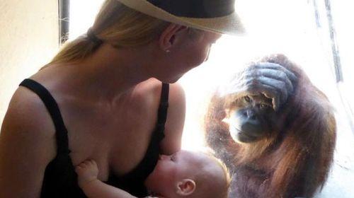 Elizabeth breastfeeding her son as an orangutan watches intently. (ABC Melbourne)