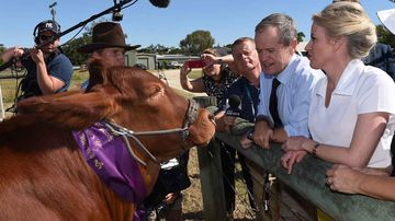 Bill Shorten (second from right) in Rockhampton. (AAP)