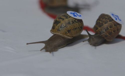 Anyone can enter. Your snail just needs a numbered sticker for ID. Image: Supplied