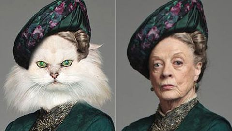 Amazing: the cast of Downton Abbey as pets