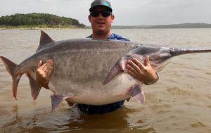 Man catches huge world-record 66kg paddlefish
