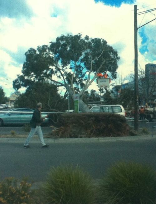 A tree falls after strong winds in the Melbourne suburb of Bayswater. (Photo: Katie Smith)