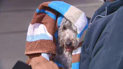 Dog rescued after becoming stuck under Melbourne tram