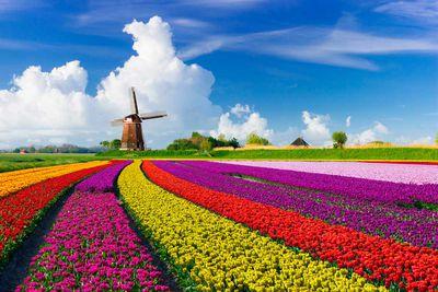 Netherlands +43.17%