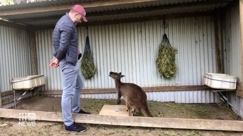 CBBC Newsround: Kangaroos can communicate with humans!