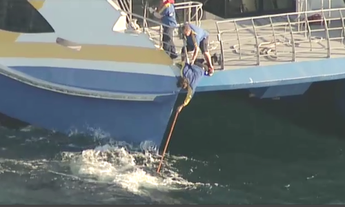 One boat drew right up to the whale and attempted to free it using a pole. Picture: 9NEWS