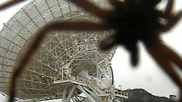 A huntsman spider towering over Tidbinbilla's massive space antenna.
