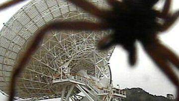 A huntsman spider towering over Tidbinbilla's massive space antenna.