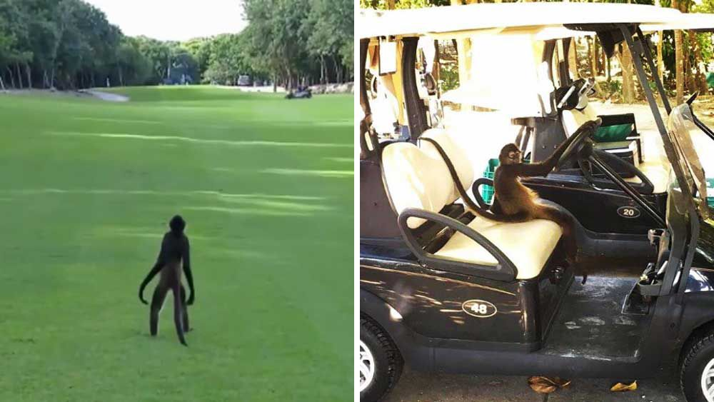 Golf: Fairway invader gets best view on the PGA Tour