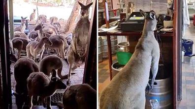 John Forrest Tavern: The WA pub overrun with kangaroos