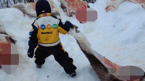 Preschool kids taken to reindeer slaughter house