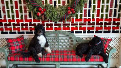 Michelle Obama used Instagram to send Christmas wishes from the Obama family, with this photograph of their pets. (Instagram)