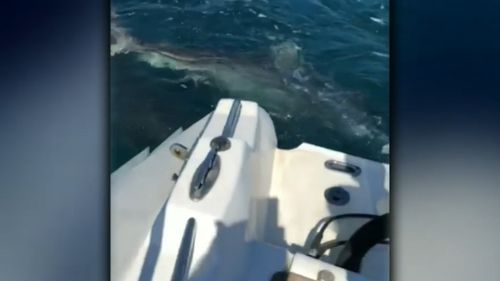 Rowan Lewis was chased by four sharks as he was fishing off Rottnest Island