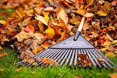 Raking leaves: 49 minutes